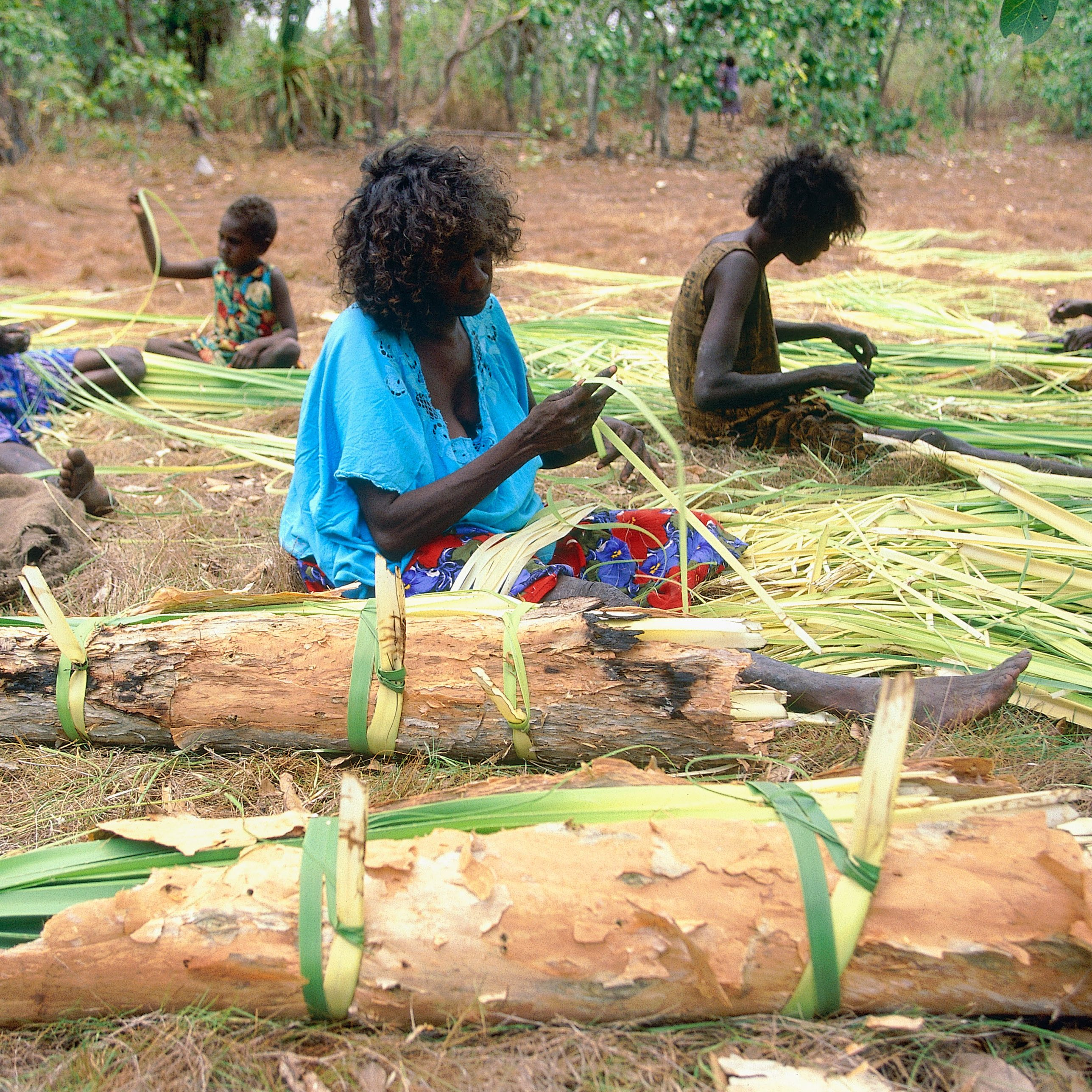AXCFEA Aboriginal women and girls having gathered pandanus are splitting it for weaving Central Arnhem Land NT Australia